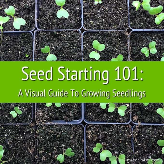 Seeds 101-2