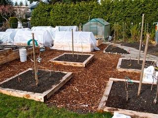 Backyard Orchard Culture: Designing Fruit Tree Quartets ...