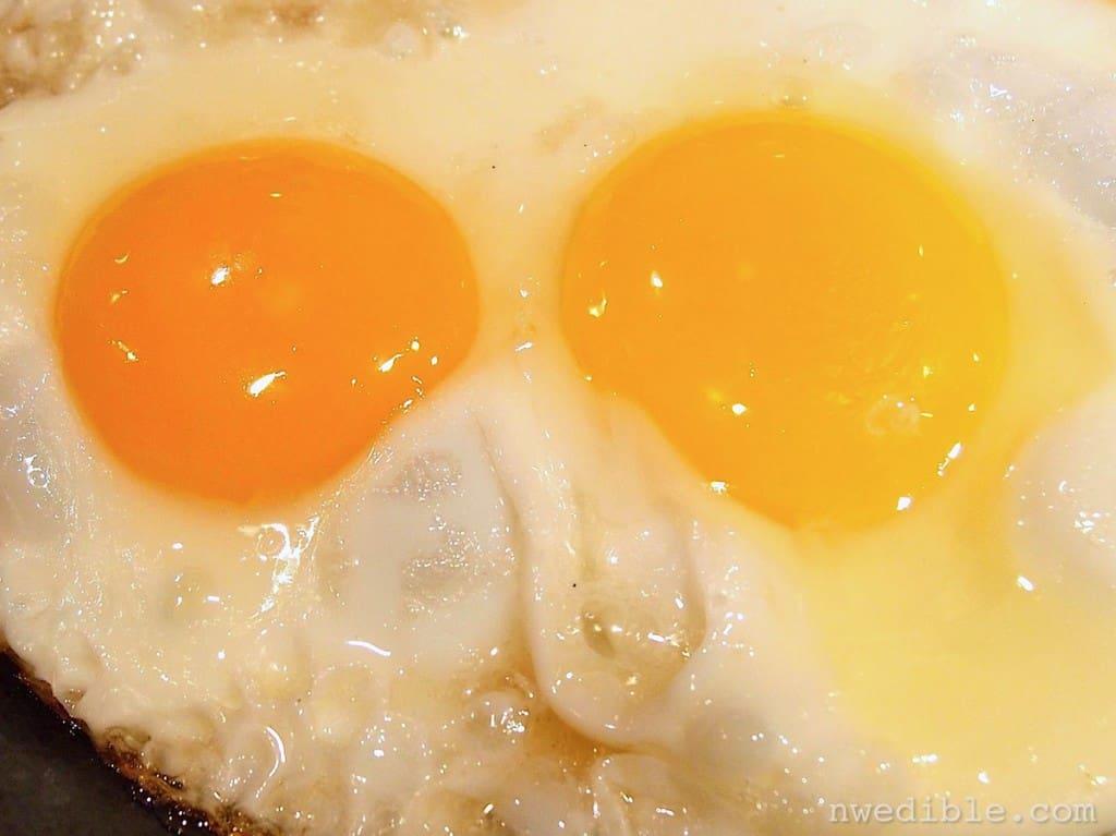 Backyard vs Store Eggs17