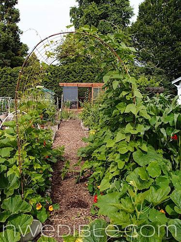 Diy Concrete Mesh And Rebar Trellis Northwest Edible Life
