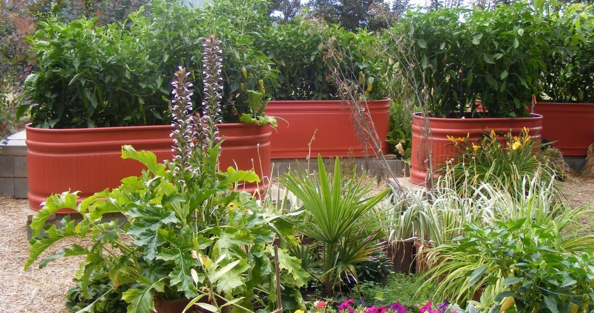 Picture of: Is This The Most Attractive Veggie Garden Ever Northwest Edible Life