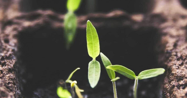 9 Hole Plant Seed Grow Box Insert Propagation Nursery Seedling Starter Tray  FB