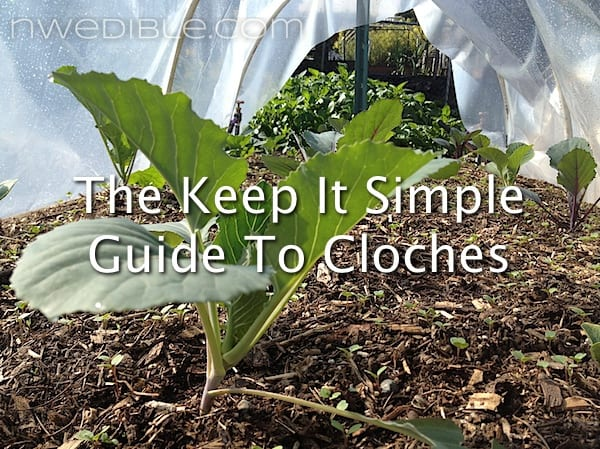 The Keep It Simple Guide To Cloches Northwest Edible Life