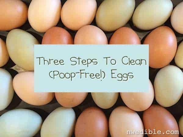 Clean Eggs