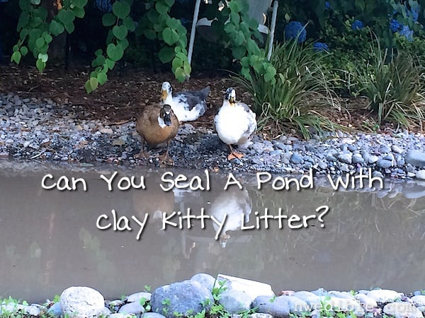 Can You Seal A Pond With Clay Kitty Litter? | Northwest