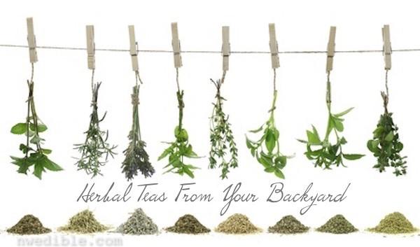 Herbal Te