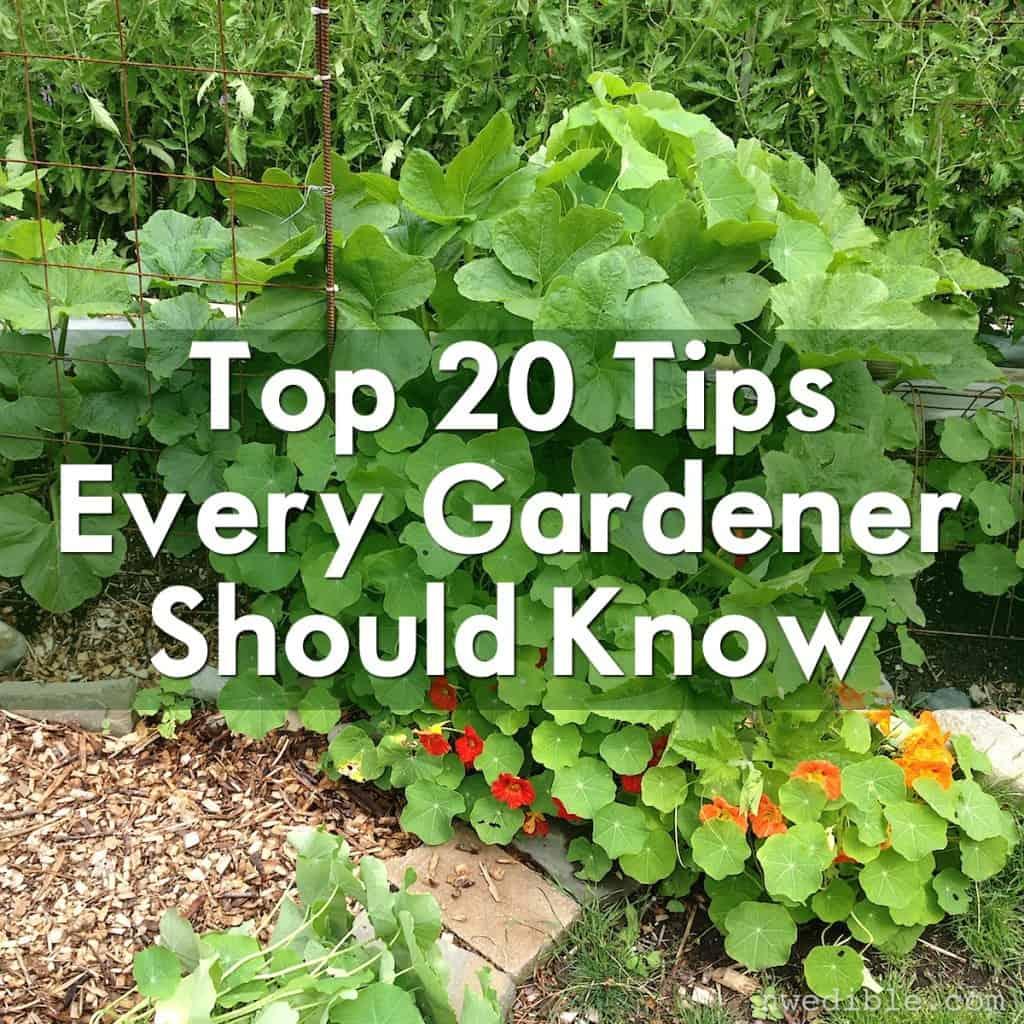 Top 20 Garden Tips