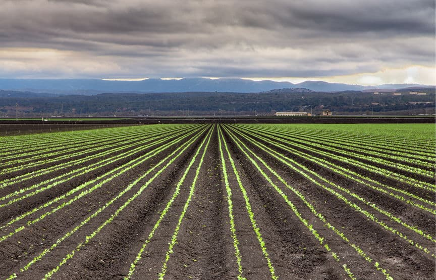 25998806 - rain clouds forming over freshly planted lettuce field in salinas valley, california