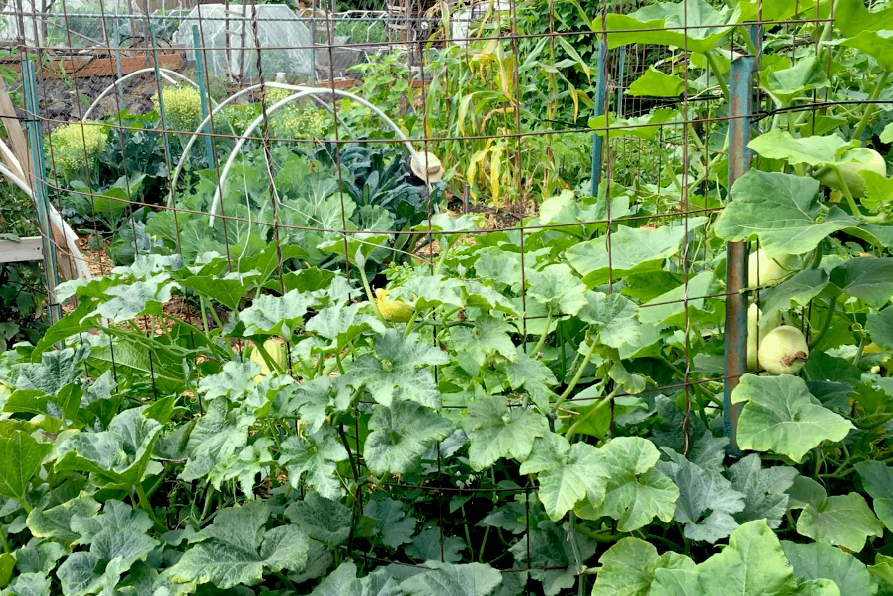 Garden 8-17-17