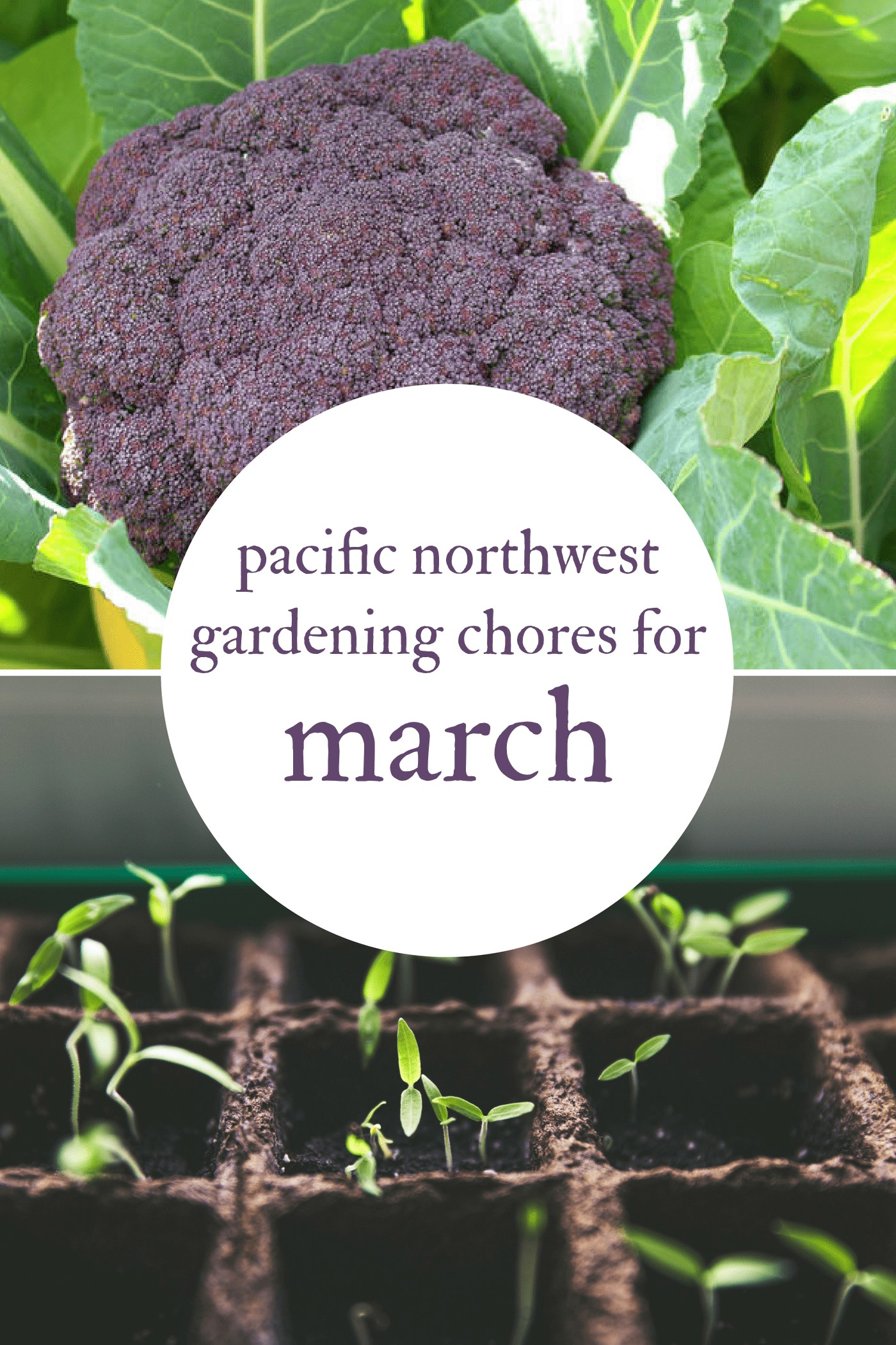 March Gardening Chores For The Pacific Northwest Northwest Edible Life