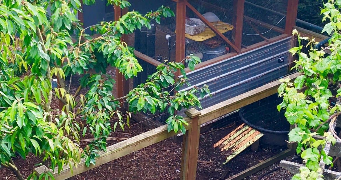 11 Chicken Coop Features I'll Never Live Without | Northwest
