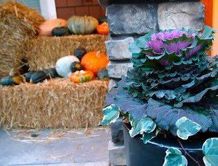 Autumn Decor, On Accident