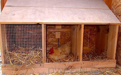 Coop Improvement: Nesting Box Failures and Successes