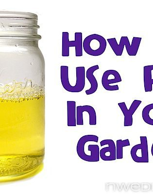 How To Use Pee In Your Garden