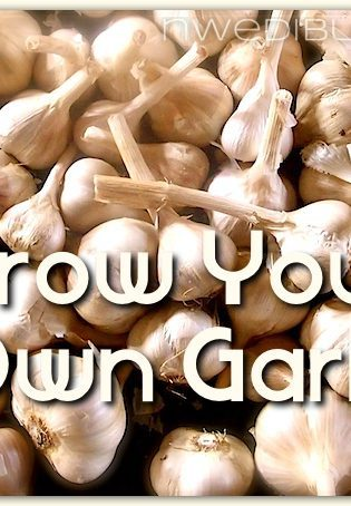 How To Grow Your Own Garlic