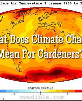 What Does Climate Change Mean For Gardeners?