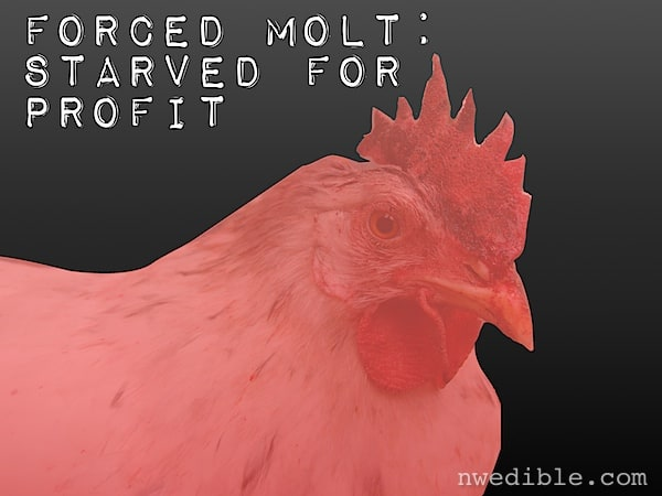 Forced Molt