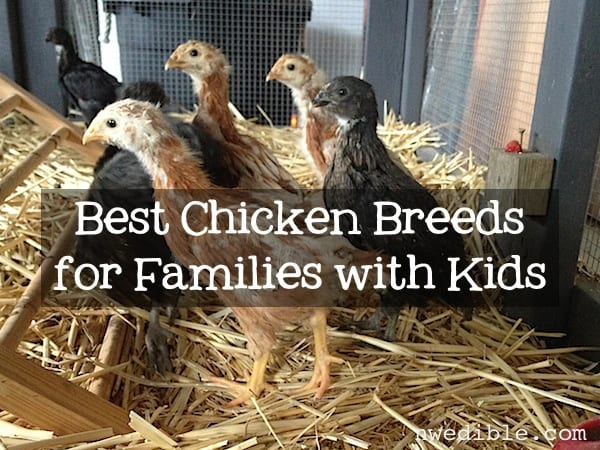 Chickens and Kids