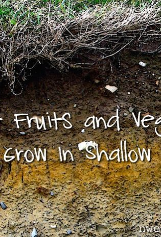 What Fruits And Veggies Will Grow In Shallow Soil? (Reader Question)