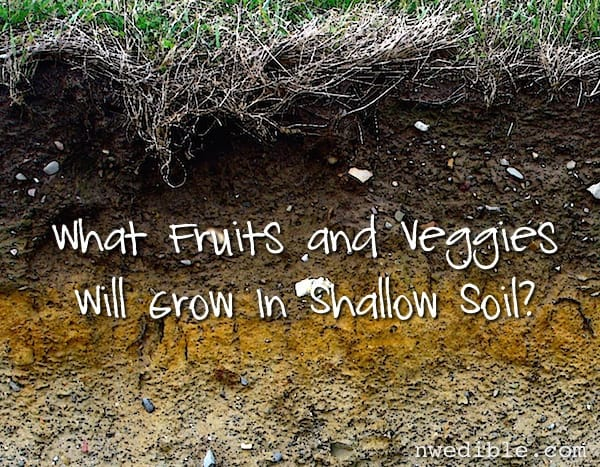What fruits and veggies will grow in shallow soil reader for Soil questions