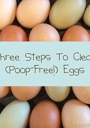 Three Steps To Clean, Poop-Free Eggs