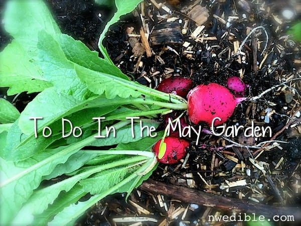 May To Do In The Garden