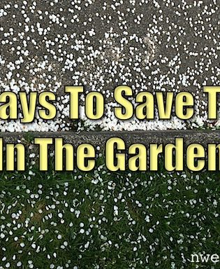 5 Ways To Save Time In The Garden