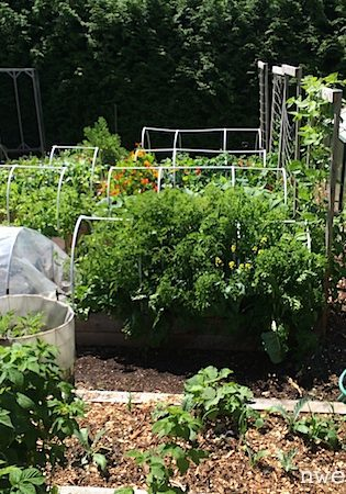 Help! Garden Anxiety! (Reader Question)