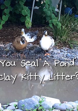 Can You Seal A Pond With Clay Kitty Litter?