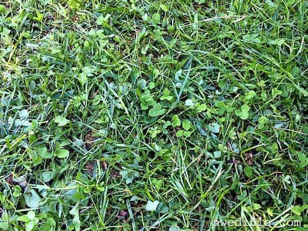 Eco-Lawn1