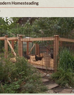 That Time They Let Me On TV (Modern Homesteading on Growing a Greener World)