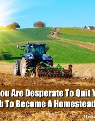 22 Signs You Are Desperate To Quit Your Office Job To Become A Homesteader