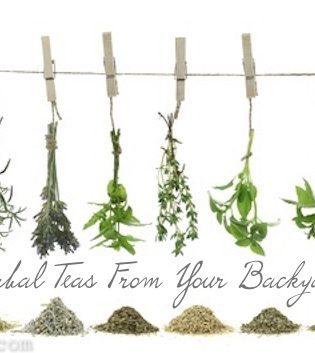 DIY Herbal Teas (The Giant Tutorial)