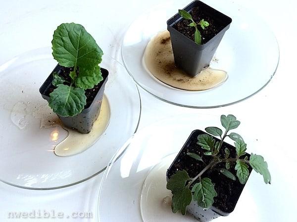 testing soil exudate