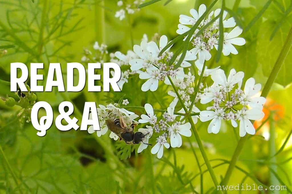 Reader Q&A