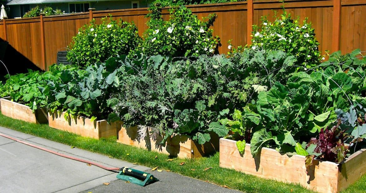 Lawn To Garden In A Single Weekend: 6 Easy Steps | Northwest Edible Life