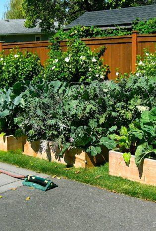 Lawn To Garden In A Single Weekend: 6 Easy Steps