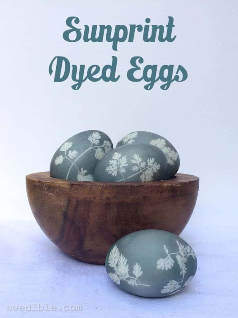 Sunprint-Dyed-Eggs77