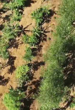 5 Must-See Permaculture and Agroforestry Videos