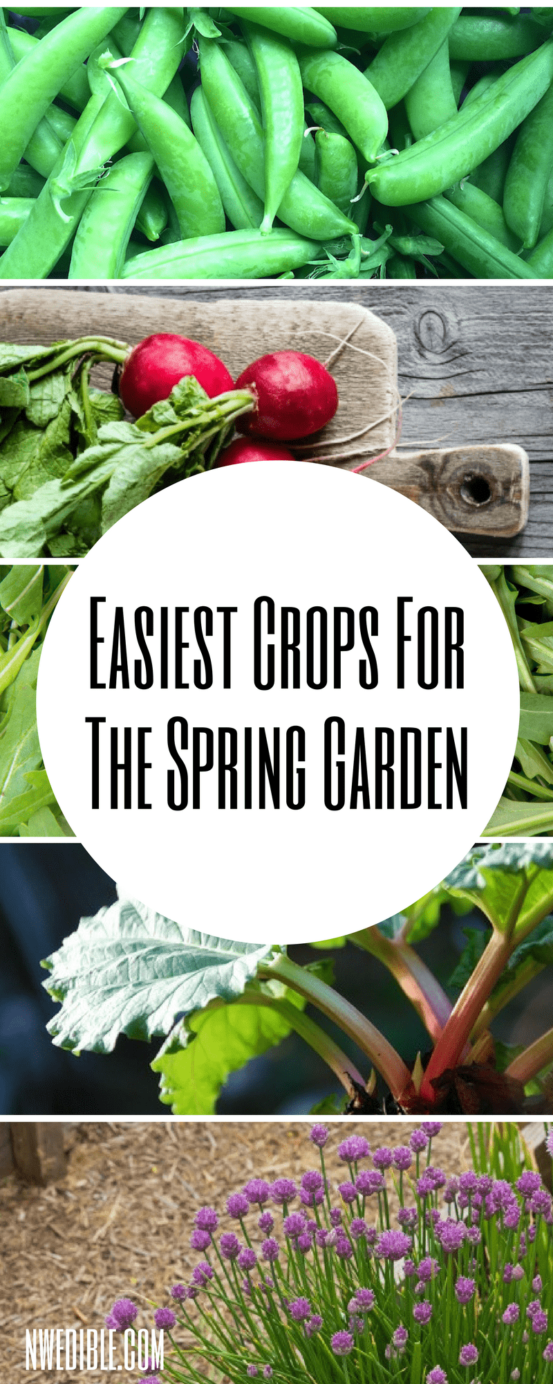 Easiest Spring Crops Graphic