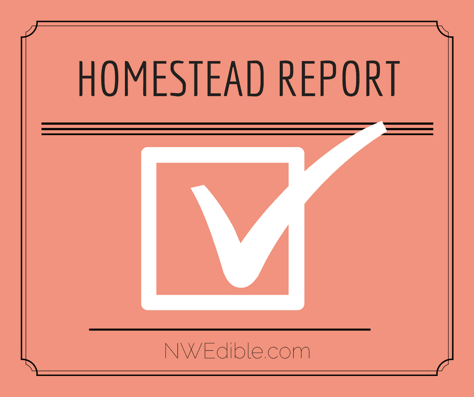 Homestead Report