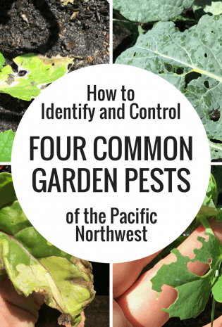 How To Identify and Control Four Common Garden Pests of the Pacific Northwest