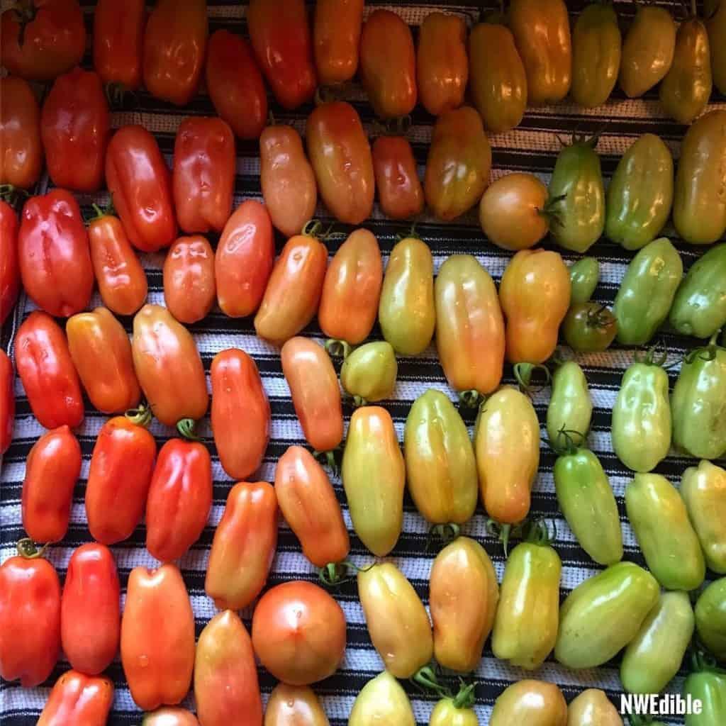 tomato-ombre