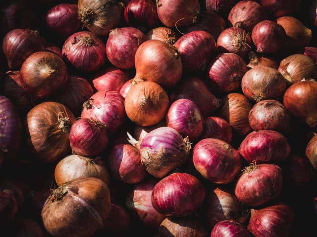 Election 2019: Matt Canavan Eats An Onion, Peter Dutton ...