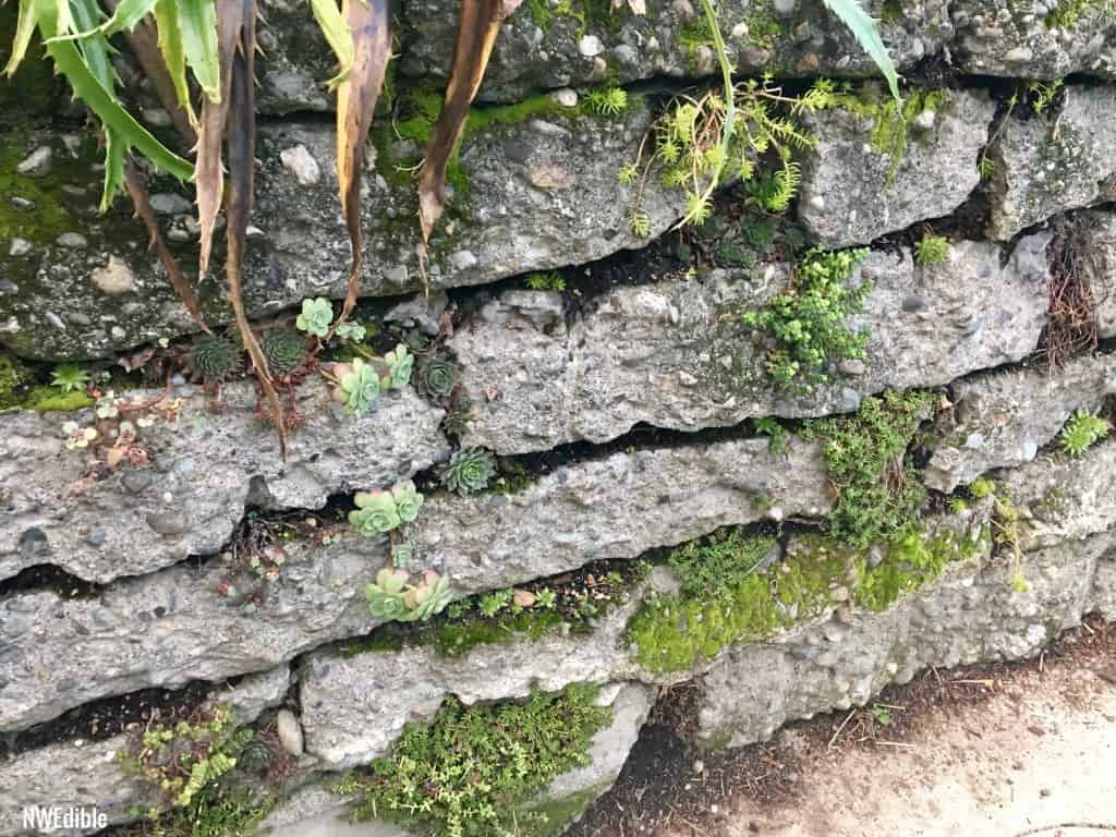Urbanite-retaining-wall6 2