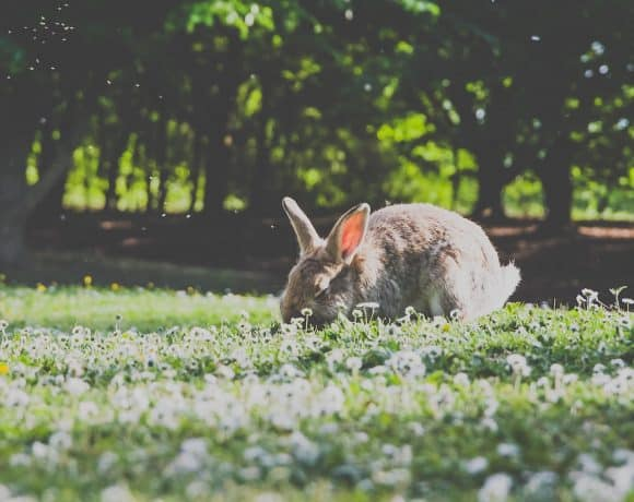 Herbs To Boost Immunity in Rabbits