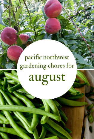 August Gardening Chores For The Pacific Northwest