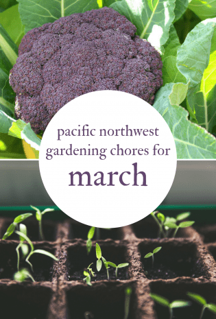 March Gardening Chores For The Pacific Northwest