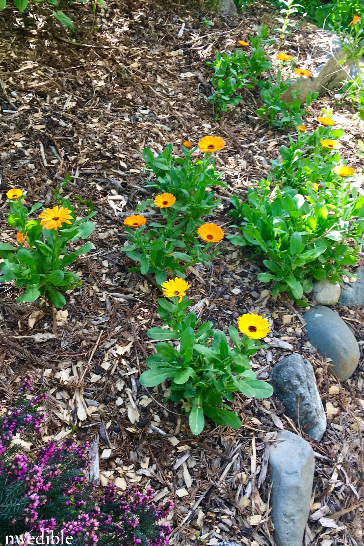 10 Self Propogating Herbs And Flowers That Take Over My Garden Every