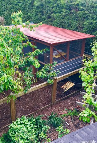 11 Chicken Coop Features I'll Never Live Without